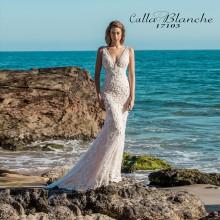 Calla Blanche - New